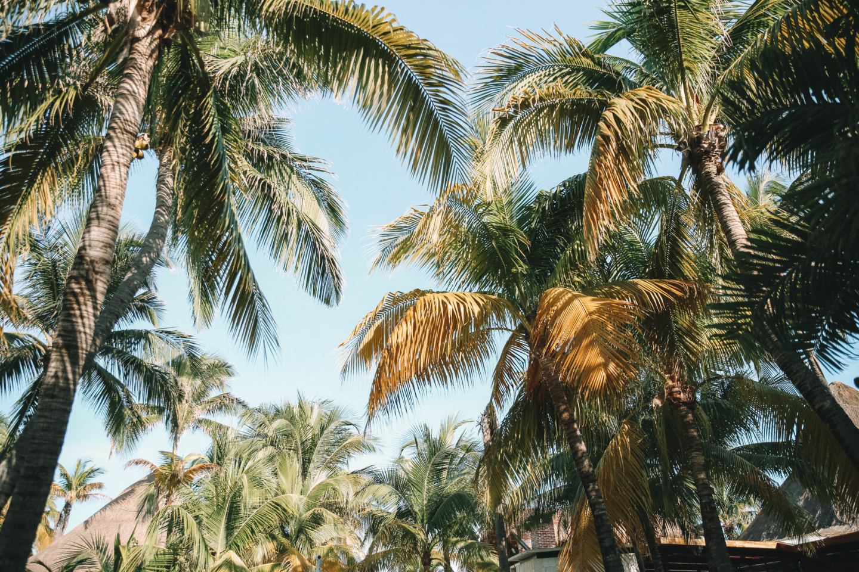 Visiter le Mexique