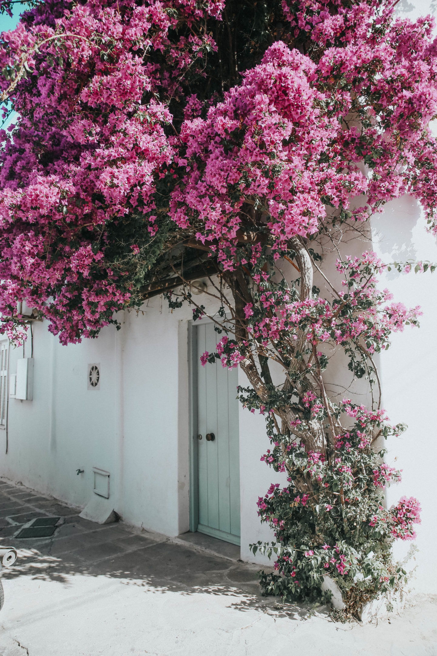 Bougainvilliers Mykonos - Blondie Baby blog mode et voyages