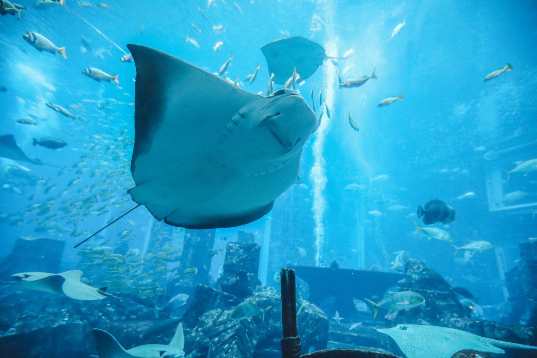 Aquarium Dubaï - Blondie Baby blog mode et voyages
