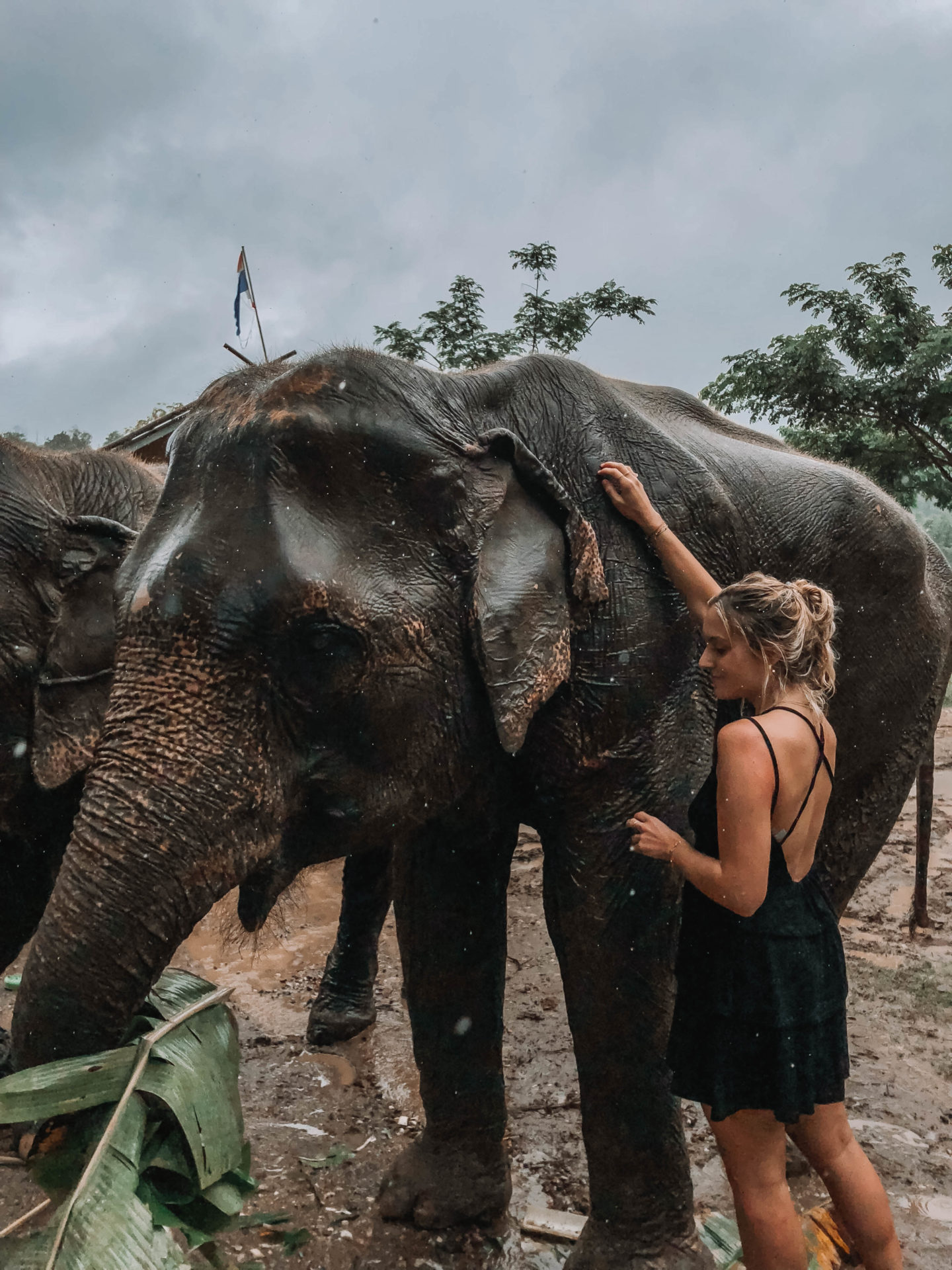 Lana Kingdom elephant Sanctuary Chiang Mai - Blondie Baby blog mode et voyages