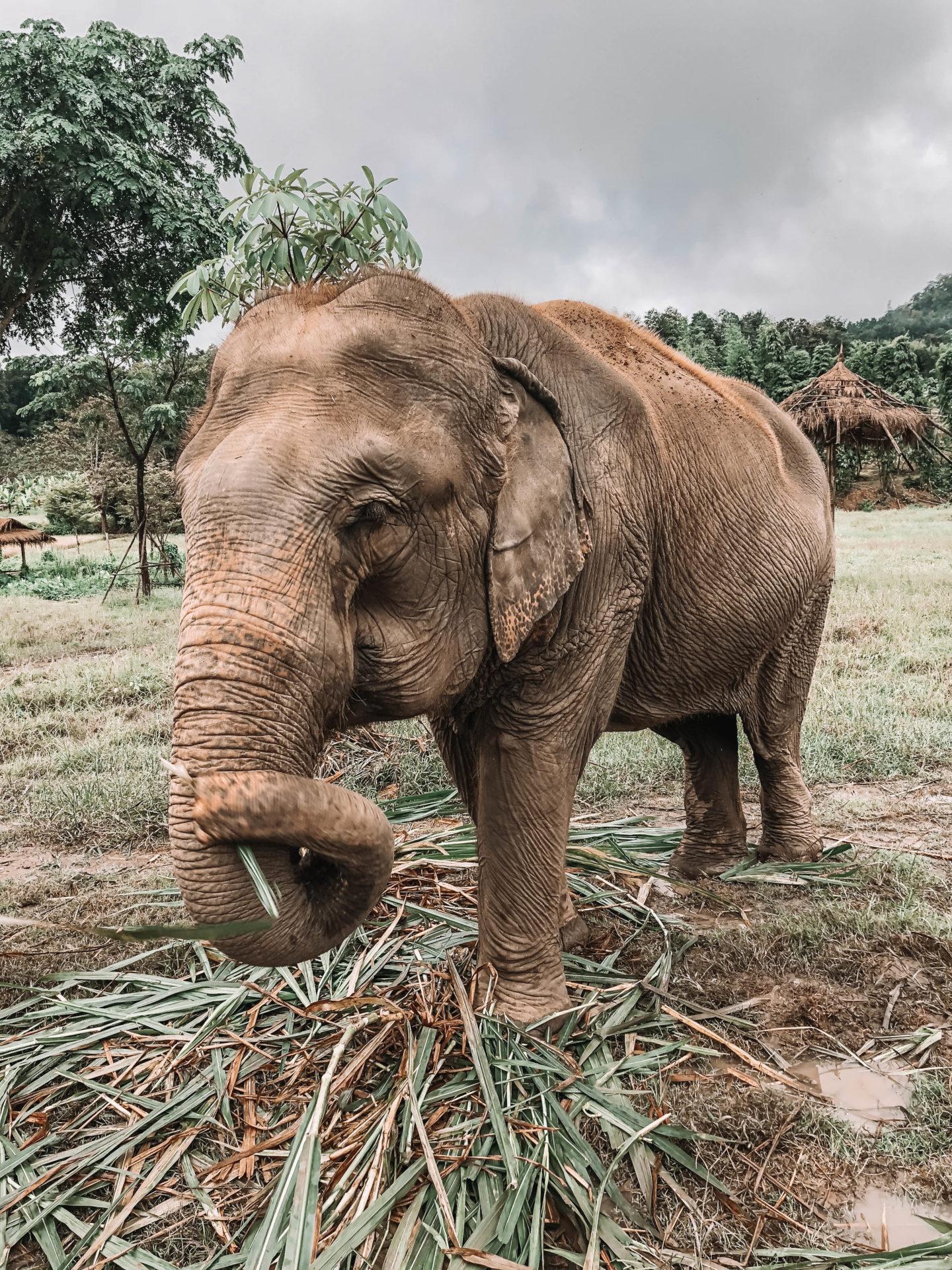 Visite éléphants Chiang Mai - Blondie Baby blog mode et voyages