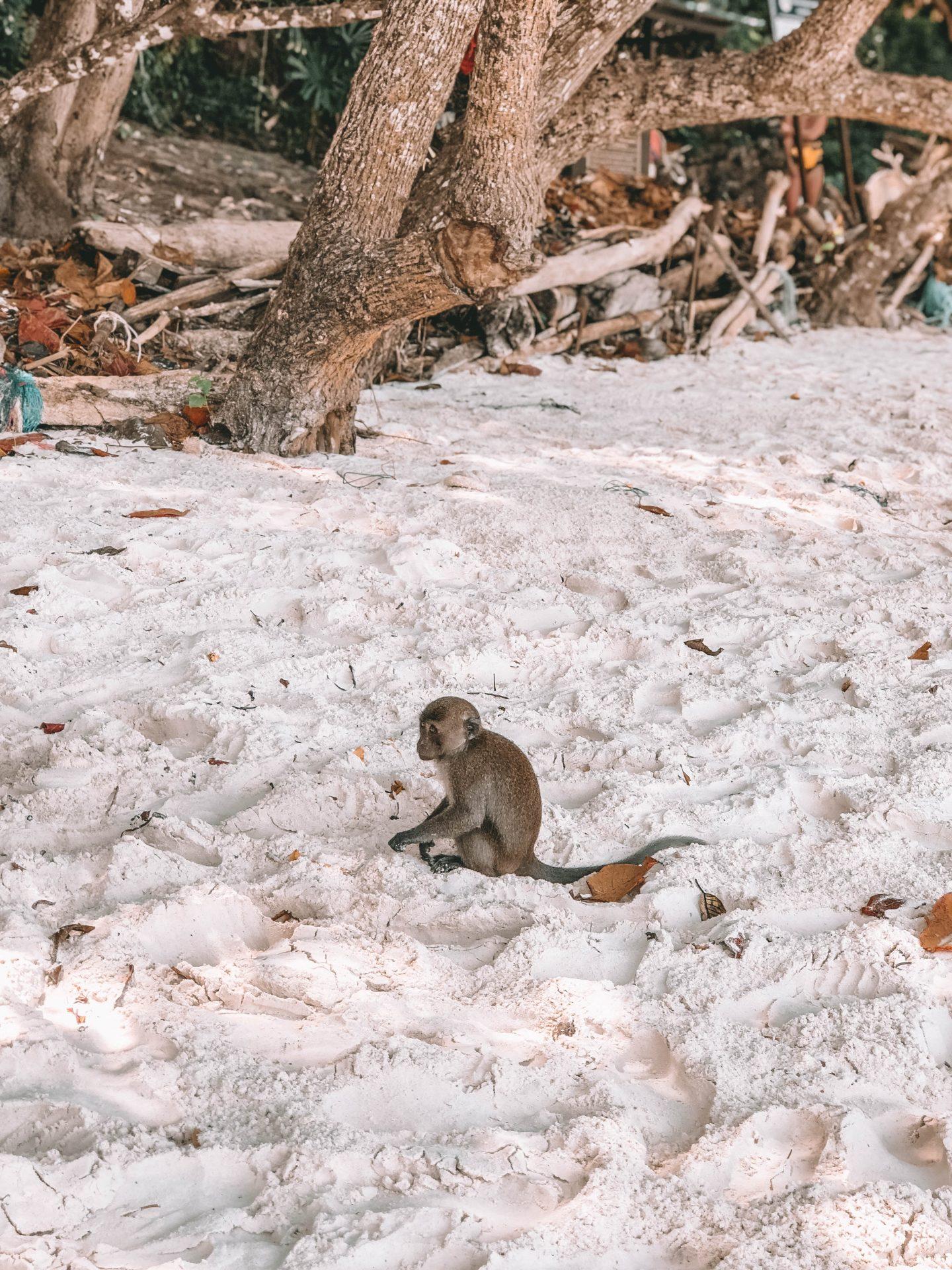 Monkey Island Ko Phi Phi - Blondie Baby blog mode et voyages