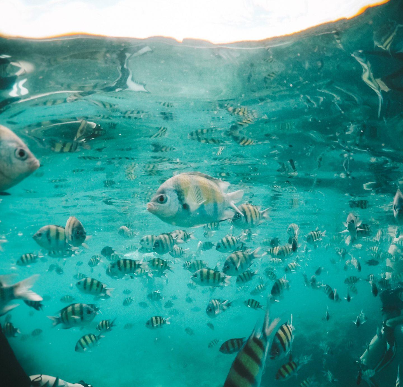 Snorkeling Ko Phi Phi - Blondie Baby blog mode et voyages