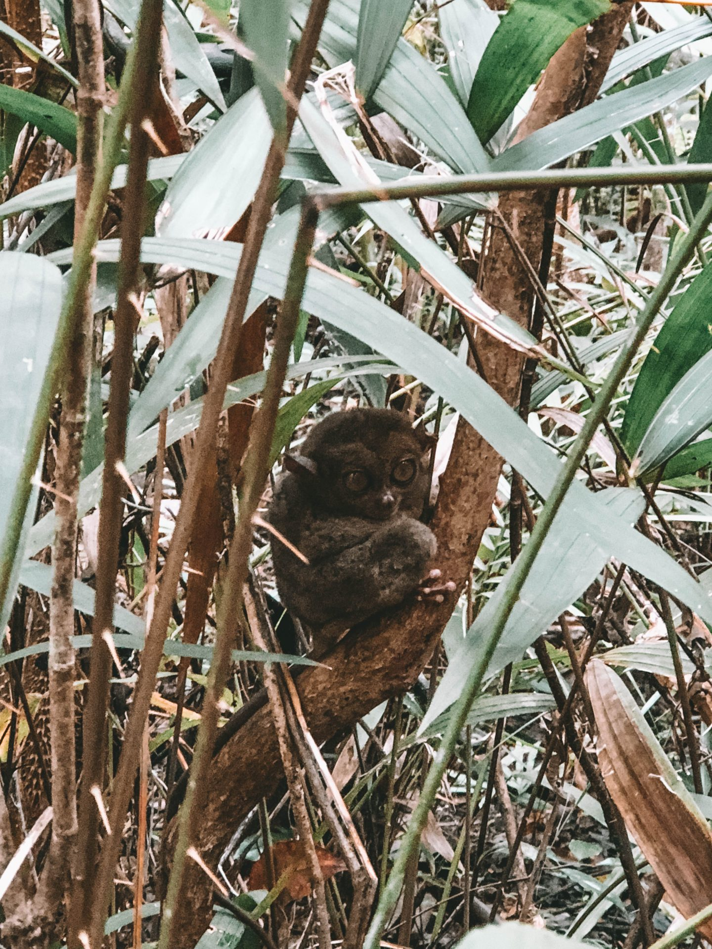 Tarsiers Philippines - Blondie Baby blog mode Paris et voyages