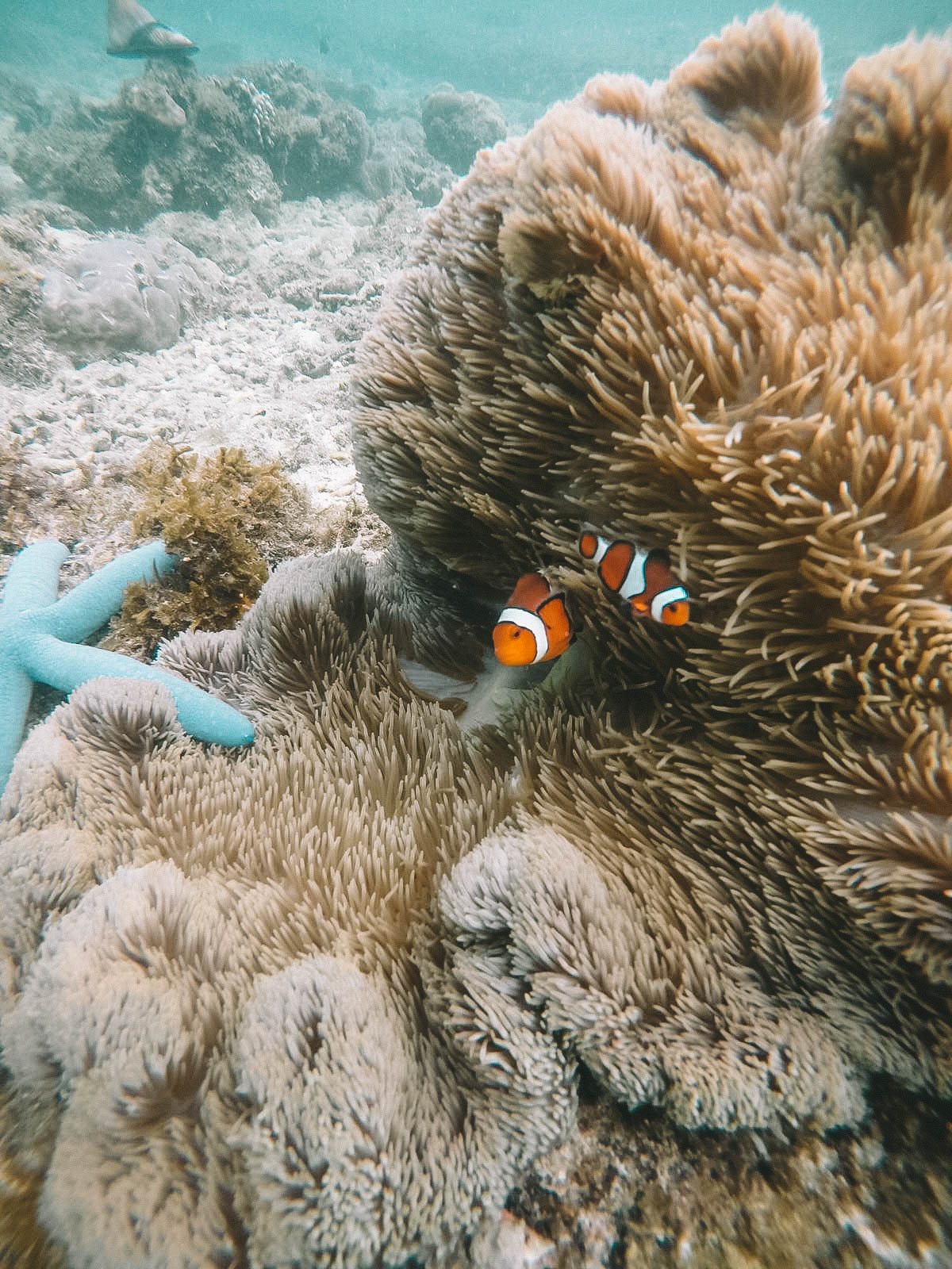 Snorkeling Apo Island - Blondie Baby blog mode Paris et voyages