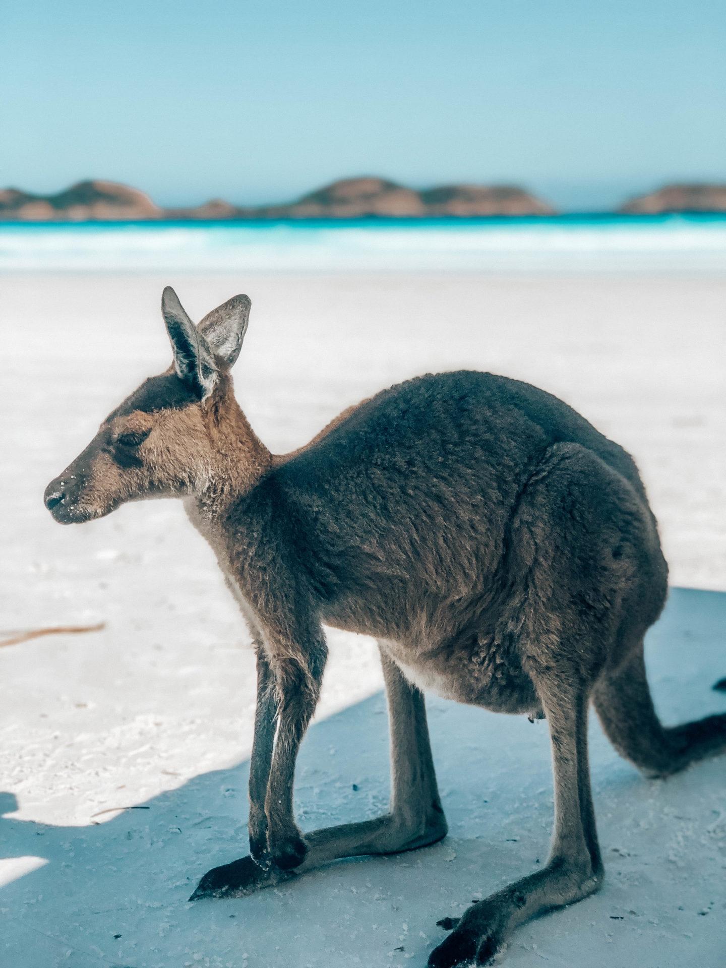 Où voir des Kangourous en Australie - Blondie Baby blog mode et voyages