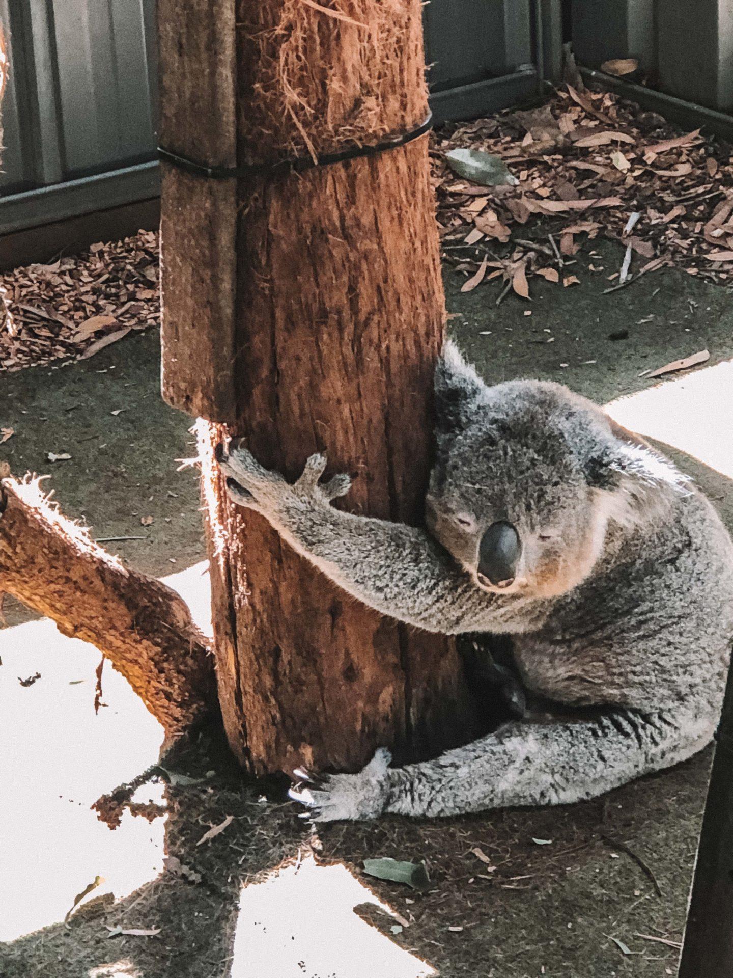 Port Macquarie Koalas Hospital Phare Byron Bay - Blondie Baby blog mode et voyages