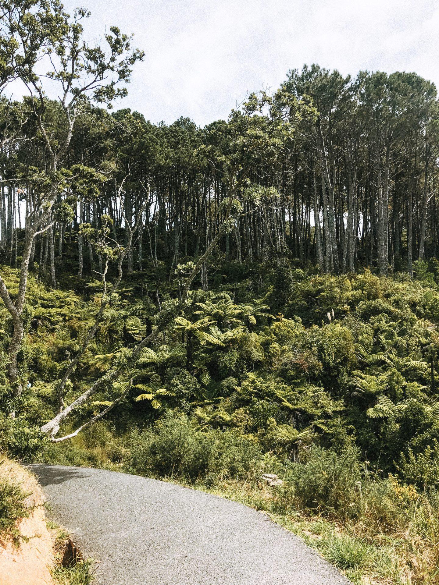 Coromandel National Park - Blondie Baby blog voyages et mode