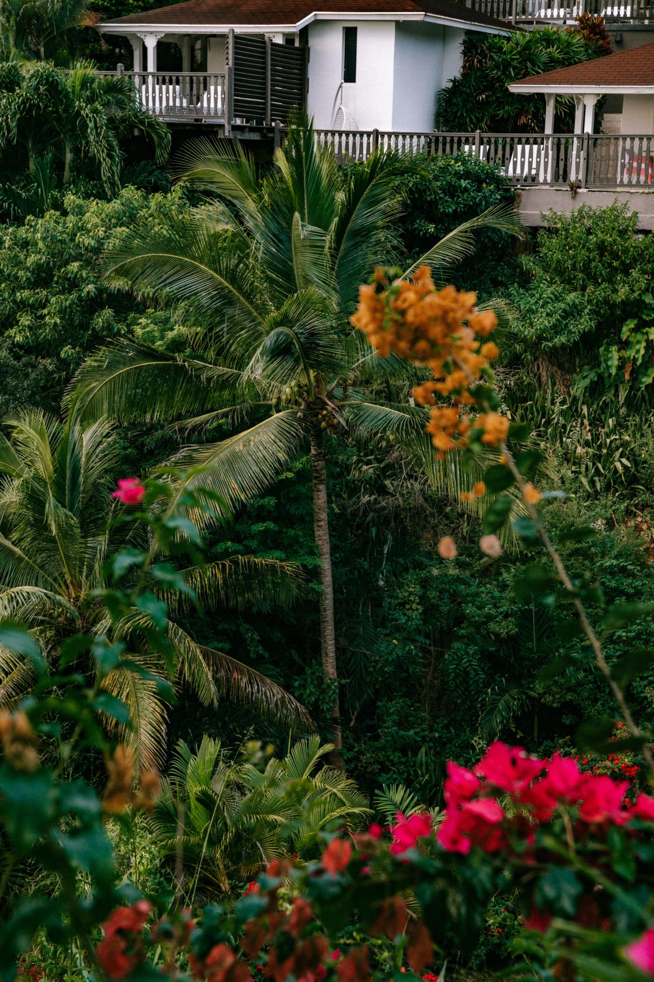 Visiter la Guadeloupe - Blondie Baby blog voyages